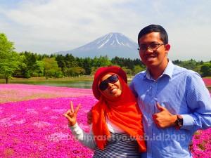 Kawaguchiko Shibazakura Festival Japan| Merasakan bunga pink di Shibazakura Festival